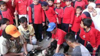 Antusias Siswa Sekolah Dasar (SD) menyaksikan penyembelihan hewan kurban. (pikiran-rakyat.com)