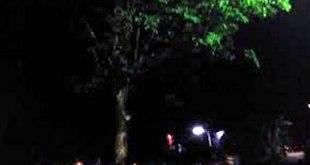 """Pohon menangis"" di Blitar. (detikcom)"