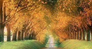 jalan-di-antara-pohon-rindang