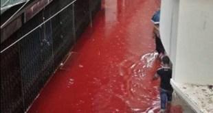 Banjir darah di kota Dhaka Bangladesh akibat buruknya sistem drainase, pasca pemotongan hewan Qurban yang diiringi dengan hujan (14/9/2016). (indiatimes.com)