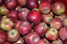 mele dal contadino