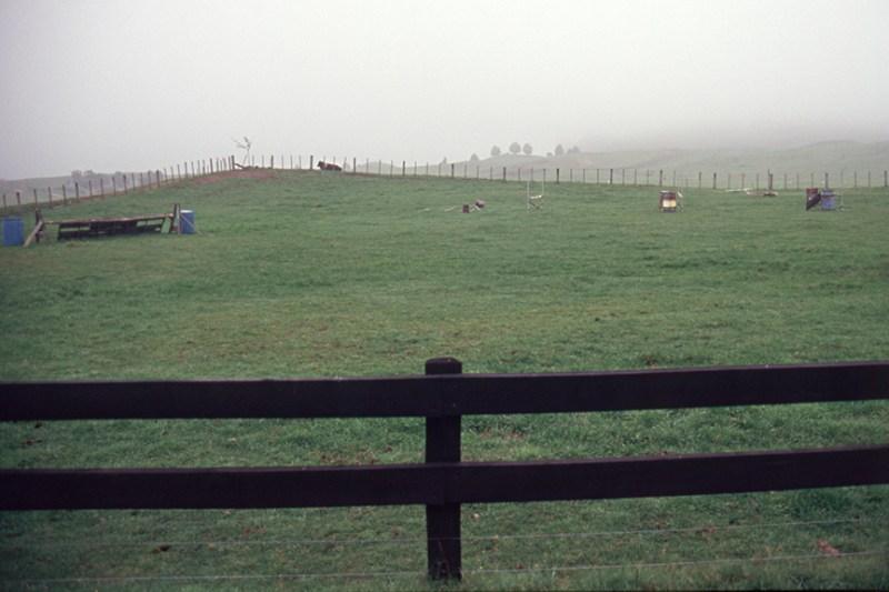 Our horse farm, Taupo