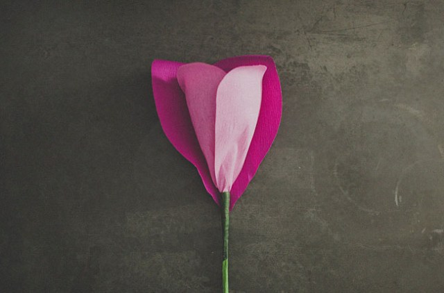 rosagigante6