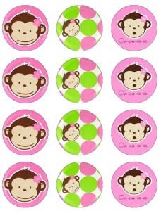 monkey16