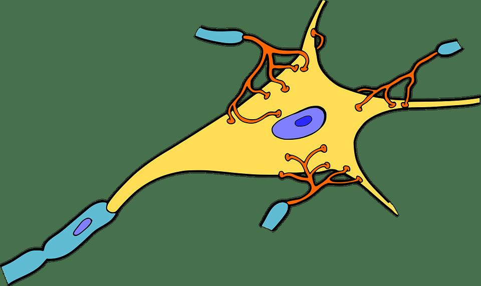 brain nerve graphic