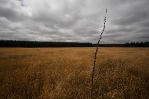 """Lonely"" v. Bruce Aldridge (CCBYSA) by Flickr"