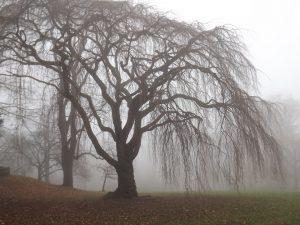 """""""Foggy Tree"""" v. Stanley Zimny (CCBYNC) by flickr"""