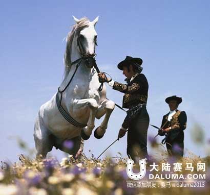 西班牙第一:赫雷斯皇家馬術學校-大陸賽馬網