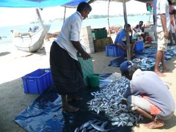 pescatori-a-unawatuna