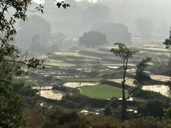 Dongria Kondh cultivated fields