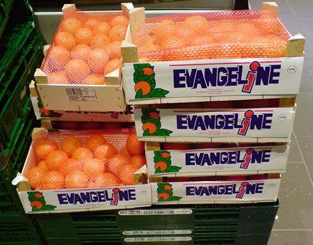 Clementinen Evangeline