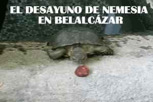 El desayuno de Nemesia en Belalcázar