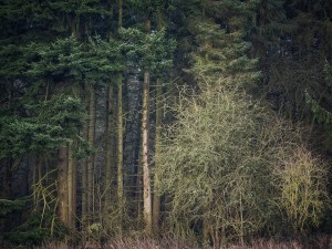 trees Landscape Photography