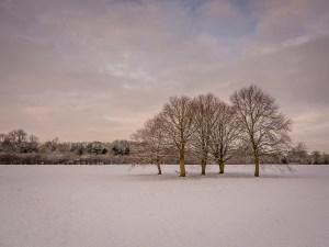 Snow Trees Landscape Photography