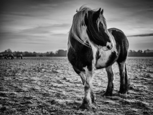 Port Meadow Horse Landscape Photography
