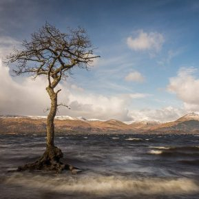 Loch Lomond Tree Milarrochy Bay Scotland Landscape Photography