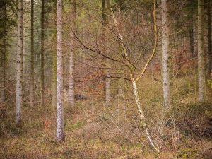 Wendover Woods Chiltern Woodland Landscape Photography
