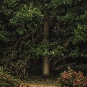 Chiltern Woodland Oak tree Landscape Photography