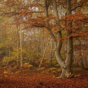 Burnham Beeches Autumn Landscape Photography