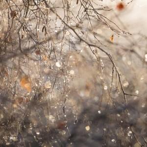 Ashridge tree Landscape Photography