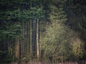 Chiltern Woodland