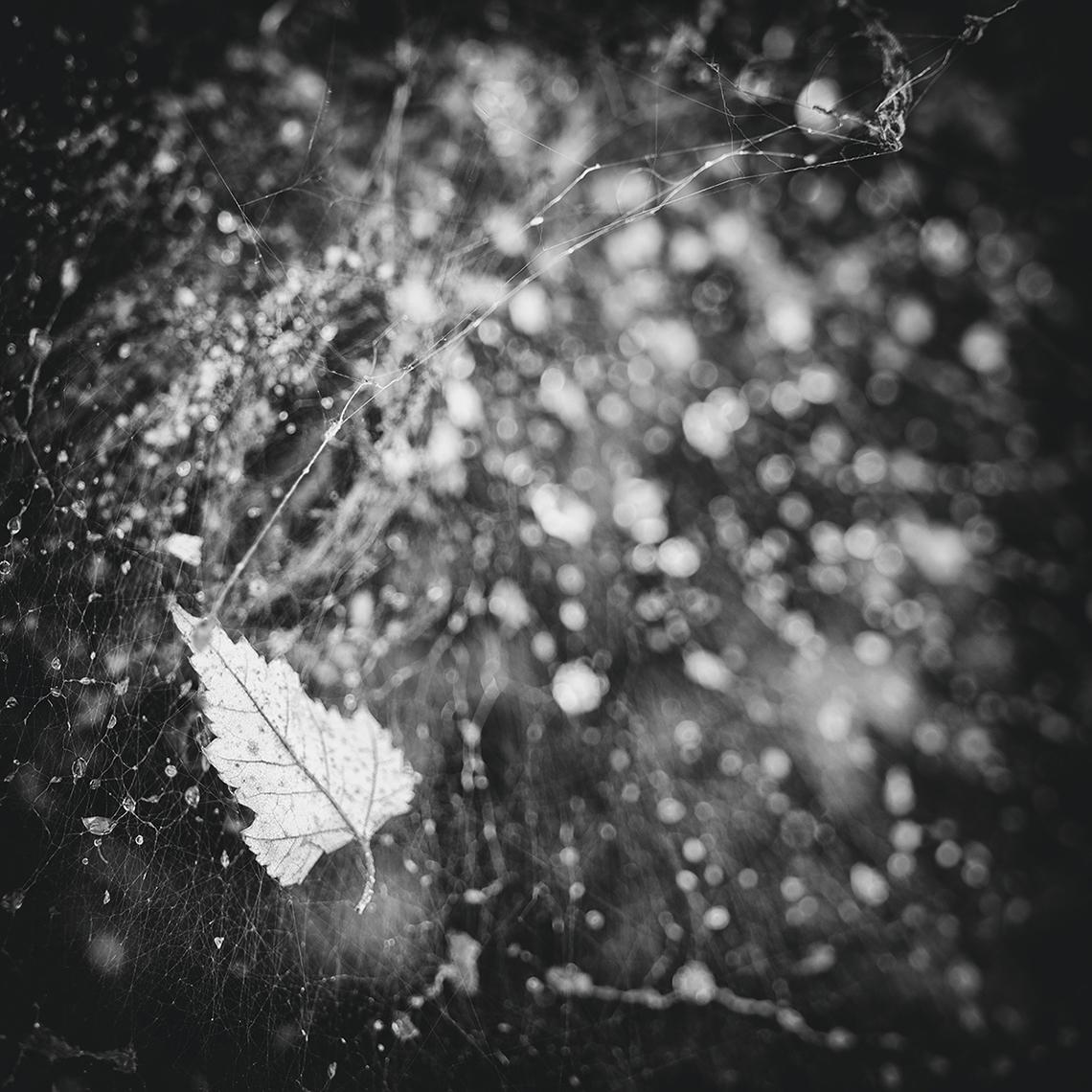 Entangled, fine art photography Cobwebs, web, spiders