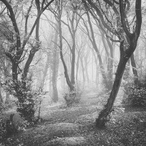 Mist chiltern woodland Landscape photography