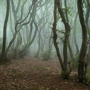 Landscape Photography of misty Chiltern hills woodland.