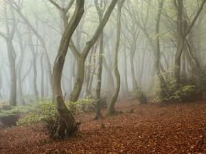 Landscape Photography of misty Chiltern Woodland