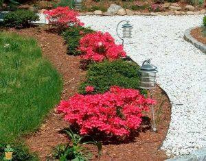 flowering shrub list dammanns