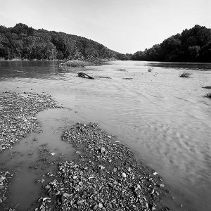 Paddlefish have not been spawning naturally on gravel bars in the Osage River since Truman Dam closed almost forty years ago.