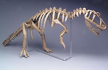 Allosaurus Skeleton, robert j. lang origami