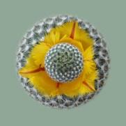 CactusTulip