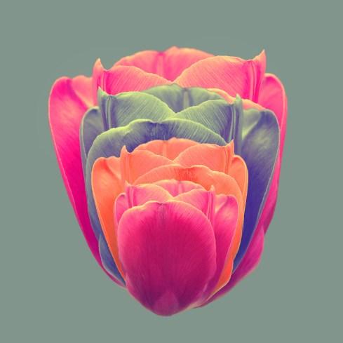 TulipCards