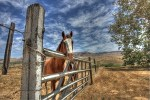 horses at the adobe 1.1