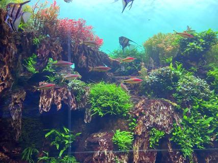 tenerife loro parque aquarium pesti