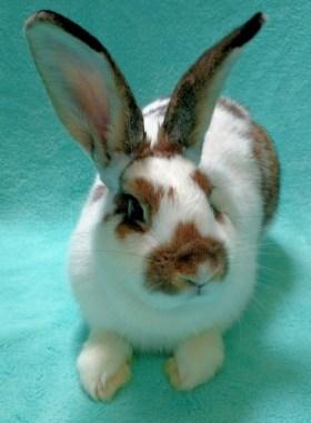 Echo. Photo: Courtesy of the San Clemente-Dana Point Animal Shelter