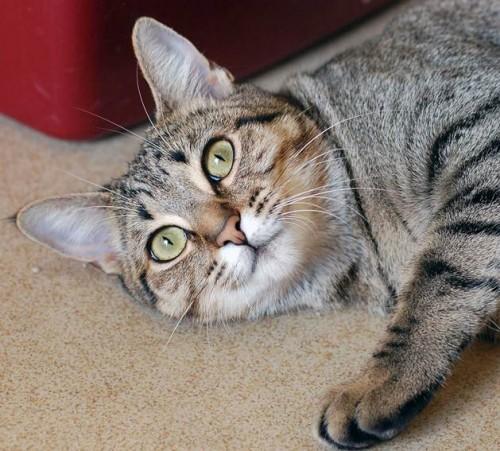 Lulu. Photo: Courtesy of the San Clemente-Dana Point Animal Shelter