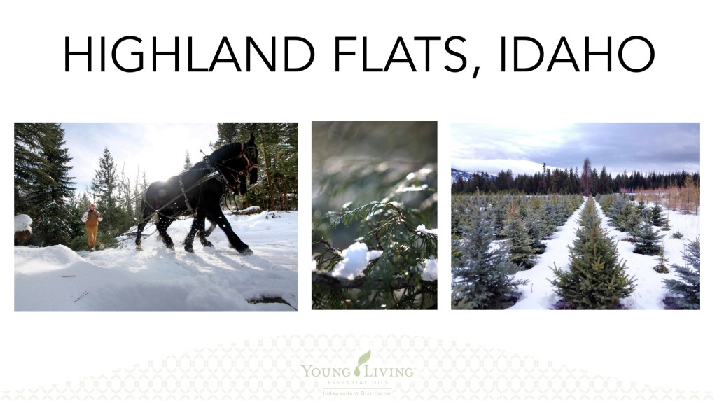 Young Living, Young Living Essential Oils, Farms, Seed to Seal, Idaho