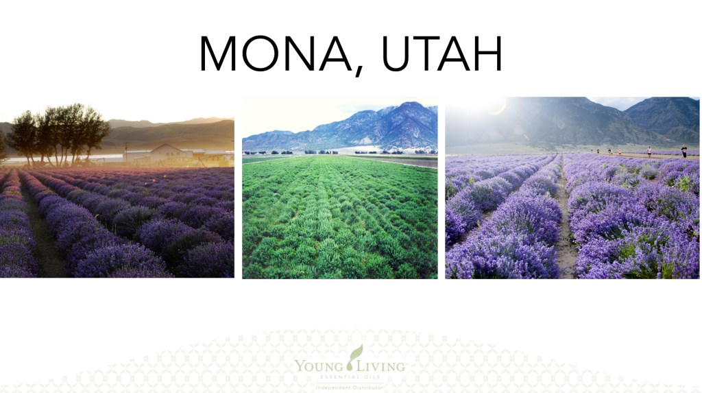 Young Living, Young Living Essential Oils, Farms, Seed to Seal, Utah