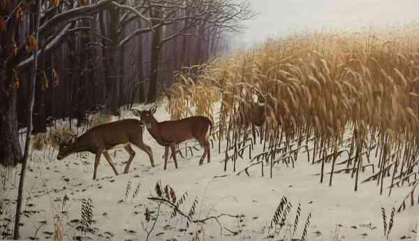 Whitetail Deer Paintings and Prints