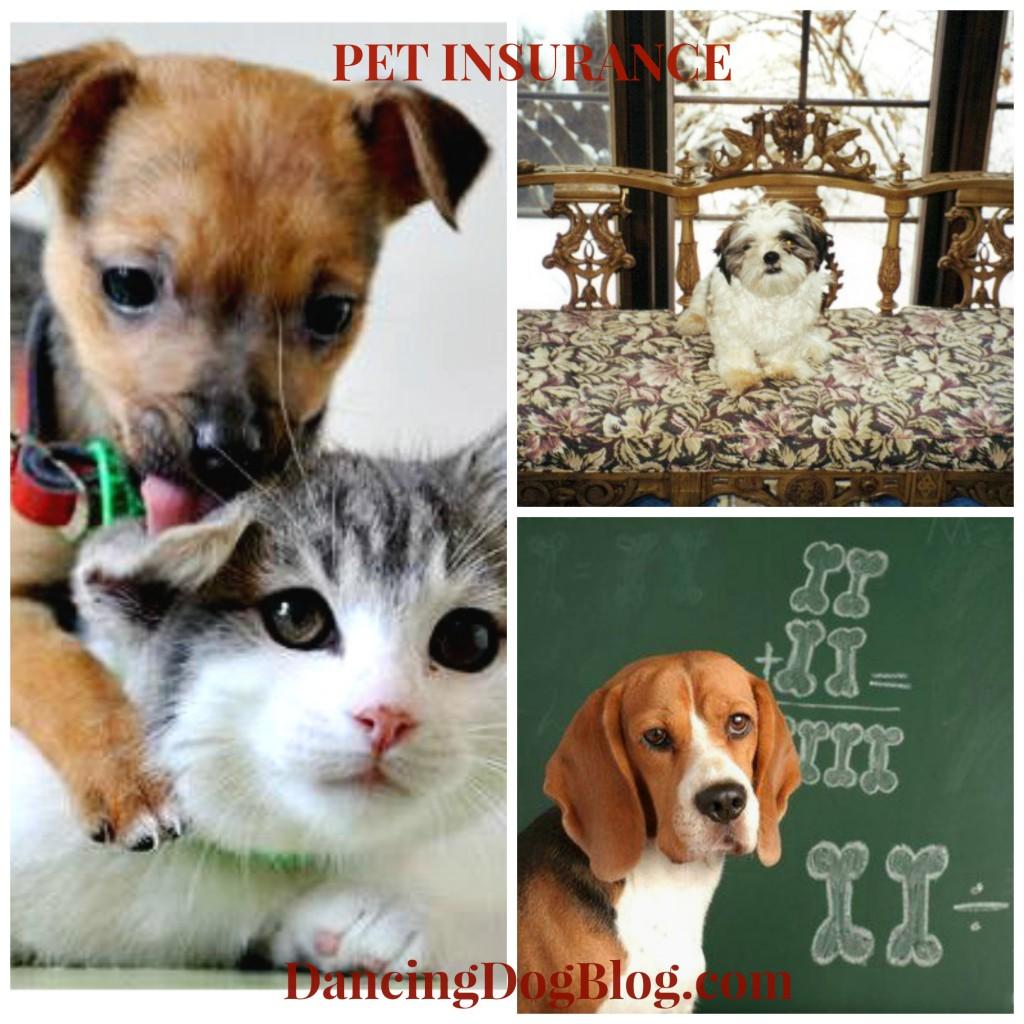 pet insurance what's best