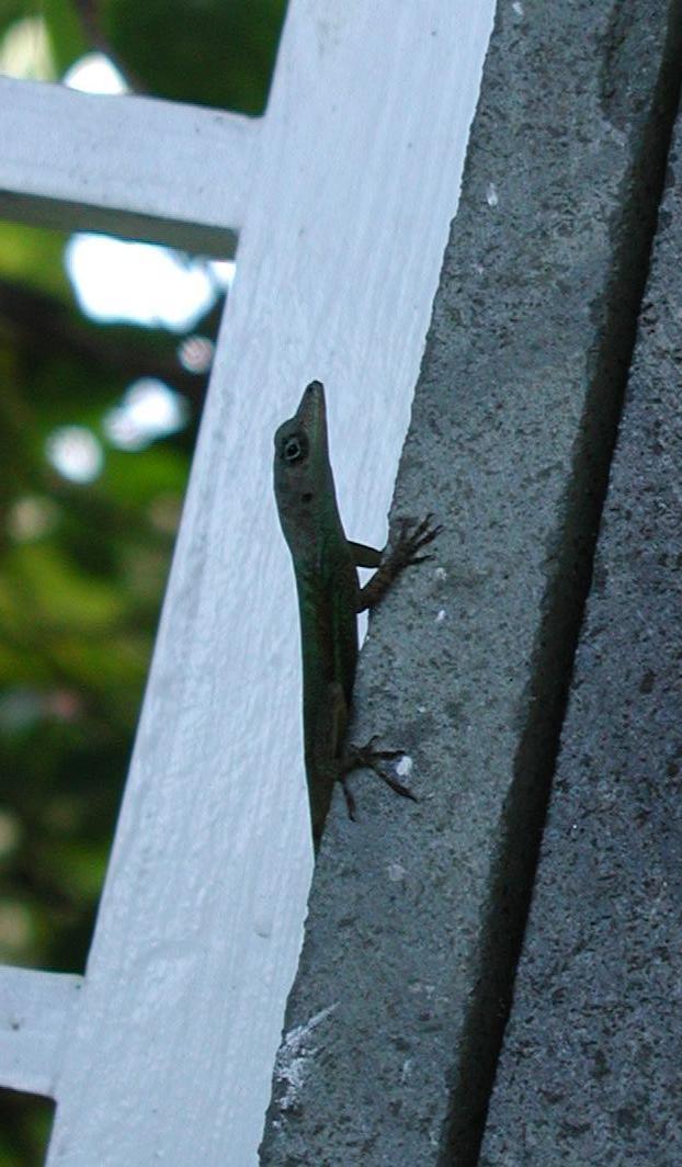 Flora  Fauna of St Lucia