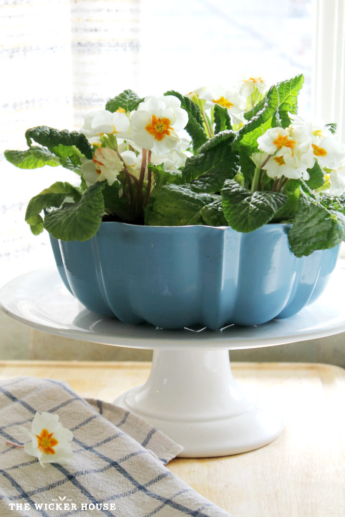 Bundt pan planter upcycled by The Wicker House