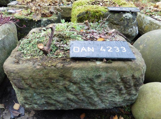 DAN 4233