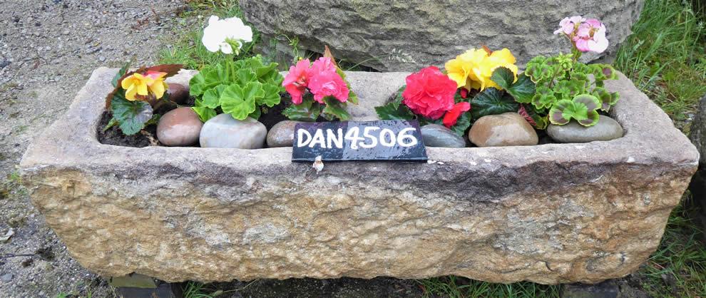 DAN 4506