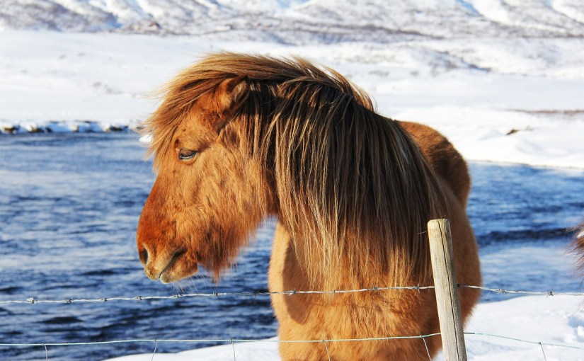 I'm Back – And Here's a Picture of a Horse…
