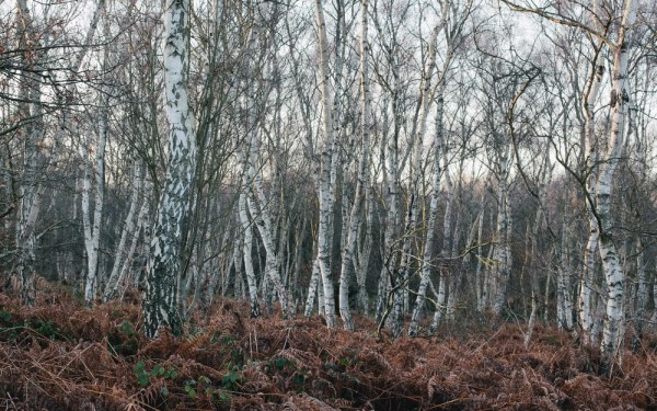 At Sherwood Forest, Nottingham.