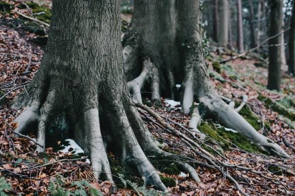 Trees outside Cromford, February 2013