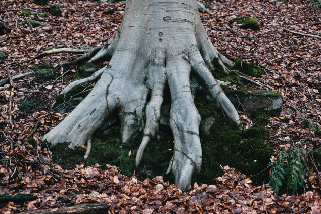 Tree, Cromford, February 2013